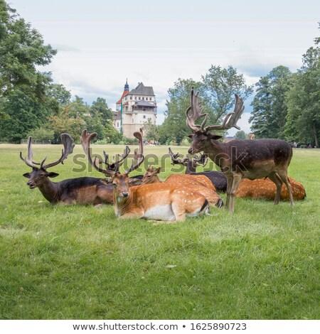 Castle Blatna Stock photo © ondrej83