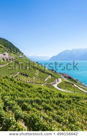 vineyards of the lavaux regionswitzerland stock photo © capturelight