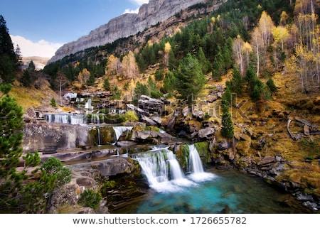 Melancolía forestales cielo azul parque árbol Foto stock © pedrosala