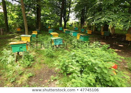 Beegarden. a few beehives in a shadow of a threes. focus on beehive in center in first row Stock photo © Paha_L