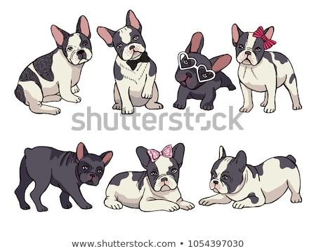 dog breed French Bulldog in glasses  Stock photo © OleksandrO