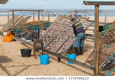 осьминога Португалия пляж рыбы морем группа Сток-фото © elxeneize
