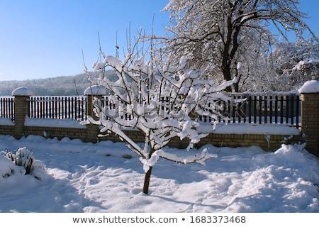 visco · árvore · blue · sky · céu · grama · natureza - foto stock © meinzahn