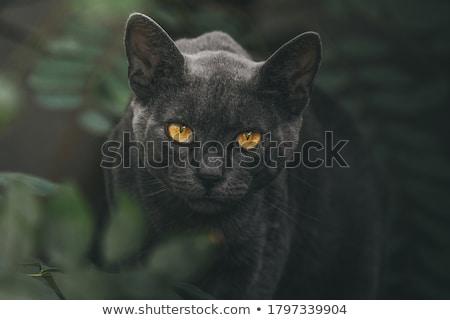 cat eyes isolated on black background stock photo © tab62