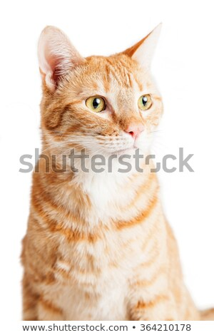Cat head looking left in white studio Stock photo © vauvau