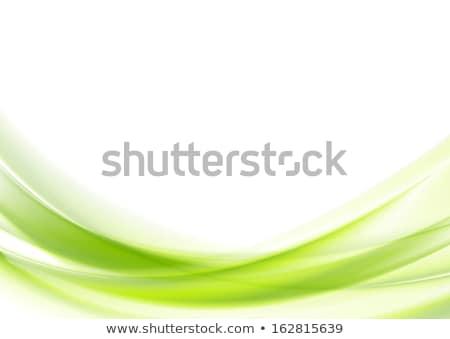 elegant green wave on white background Stock photo © SArts