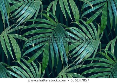 Sin costura tropicales selva floral patrón palma Foto stock © fresh_5265954