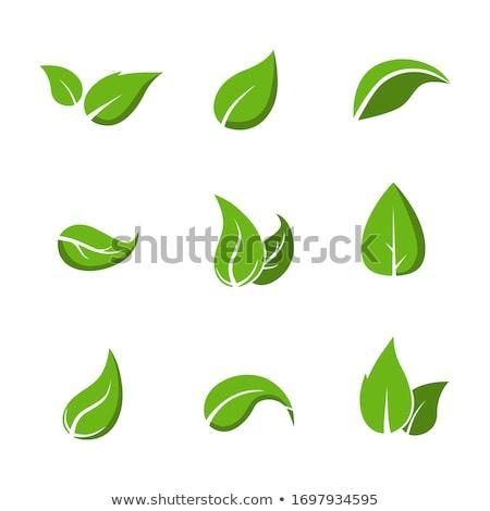 Сток-фото: различный · зеленые · листья · иллюстрация · фон · искусства · зеленый