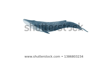 bleu · baleine · blanche · illustration · poissons · heureux - photo stock © bluering