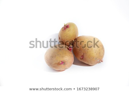 old potatoes with sprouts isolated on white background stock photo © ivo_13