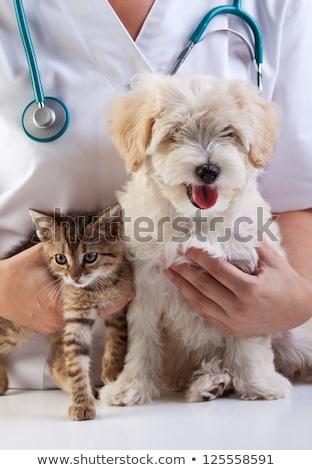 young caucasian veterinarian with cat in hands stock photo © rastudio