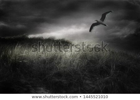 gull in flight on stormy sky Stock photo © taviphoto