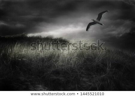 blue · sky · imaturo · norte · vôo · norte · mar - foto stock © taviphoto