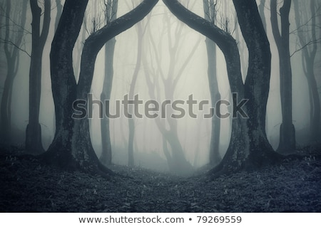 Autumn landscape with forest road and gate Stock photo © Kotenko