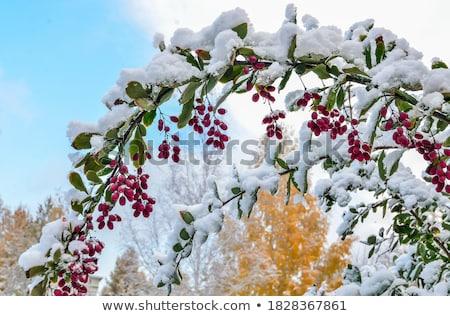 Congelato Bush freddo autunno giorno luce Foto d'archivio © Juhku