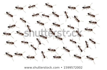Seamless ant bug wallpaper Stock photo © bluering