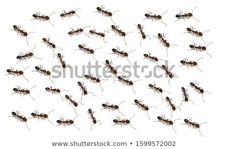 бесшовный муравей ошибка обои иллюстрация дизайна Сток-фото © bluering