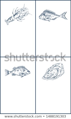 Lobster and Crayfish, Bream or Bass Seafood Poster Stock photo © robuart