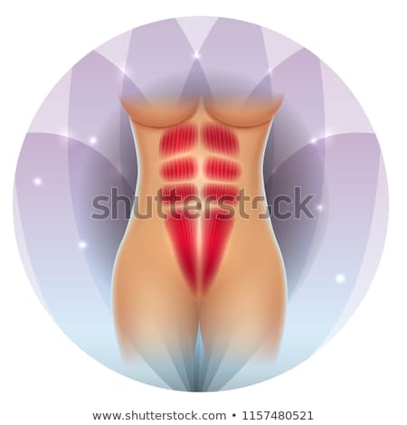 Fit waist muscles six pack Stock photo © Tefi