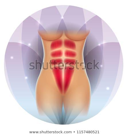 fit waist muscles six pack stock photo © tefi