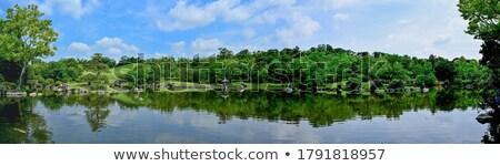 Drie groene gazon vijver illustratie natuur Stockfoto © colematt