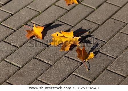 ahşap · bank · sonbahar · park · yol · ahşap - stok fotoğraf © vapi