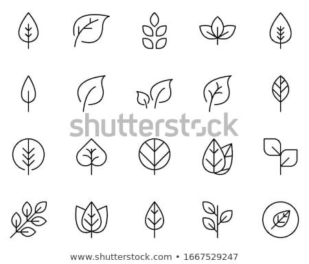 Grüne Blätter Clip Art Vektor Symbol Symbol Stock foto © blaskorizov