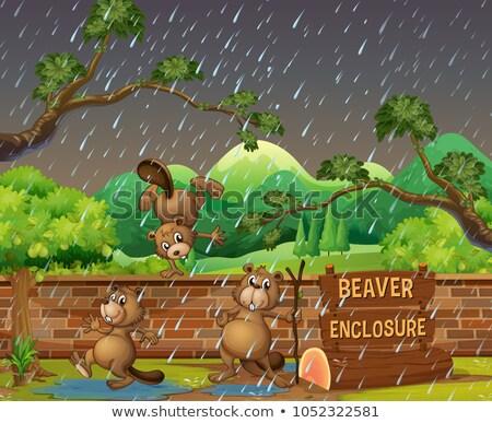 Három állatkert nap illusztráció tájkép kert Stock fotó © colematt