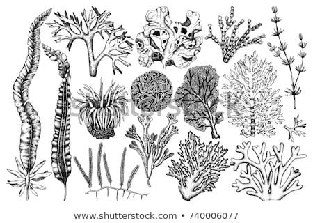 océanique · algues · corail · vintage · vecteur · décoratif - photo stock © pikepicture