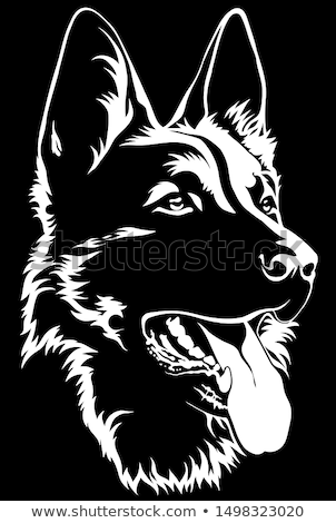 Portrait of German Shepherd dog Stock photo © Artspace