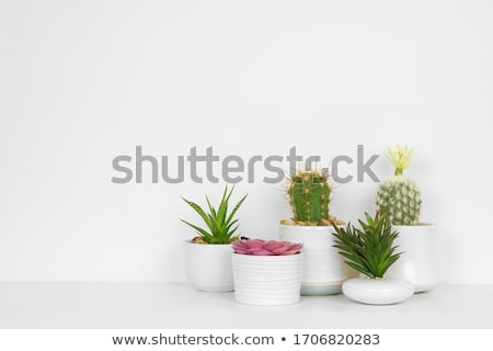 Many house plants in pots in the white background  stock photo © dashapetrenko