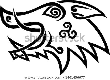 кабан голову кельтской узел черно белые шаблон Сток-фото © patrimonio