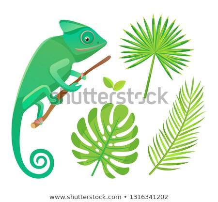 Flora fauna kameleon varen blad vector Stockfoto © robuart