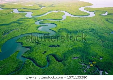 természetes · mocsár · Thaiföld · tájkép · háttér · fák - stock fotó © vapi