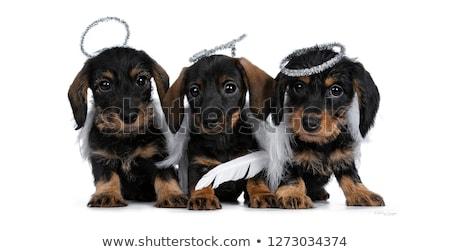 Rij drie zwarte bruin aanbiddelijk klein Stockfoto © CatchyImages