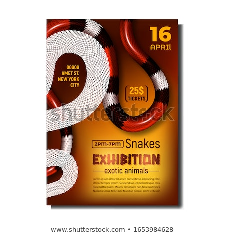 coral snake poisonous and danger mammal vector stock photo © pikepicture