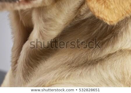 Yakın karışık köpekler boyun Stok fotoğraf © vauvau