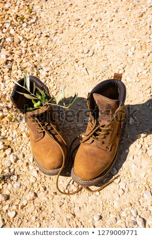 Pause Toscane chaussures olive soleil nature Photo stock © Dar1930
