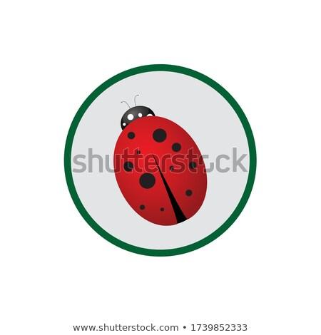 Ladybug ikona zielone kółko zwierząt wiosną Zdjęcia stock © Imaagio