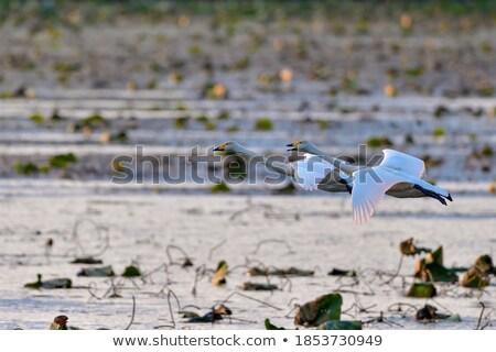 Dois voador laranja silhuetas céu luz Foto stock © mayboro