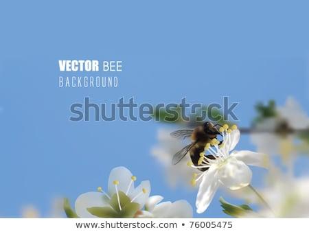 Humming bee on flowers Stock photo © photoblueice