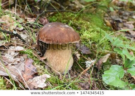 寄生虫 · 菌 · 成長 · 木の幹 · ツリー · 森林 - ストックフォト © gsermek
