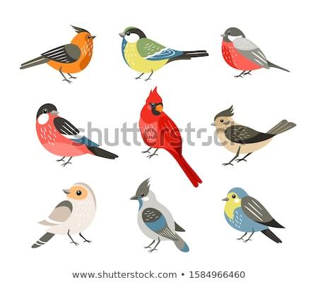 Vektör mavi kuş karikatür stil ağaç Stok fotoğraf © jordygraph