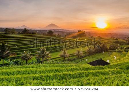 Rizsföld Bali Indonézia házak tájkép trópusi Stock fotó © travelphotography