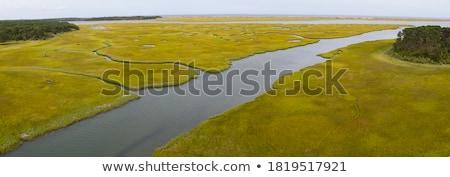 Salt marshes Stock photo © IngaNielsen