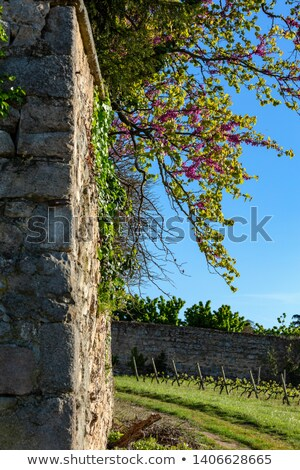 stone wall in evening light with grass and sky stock photo © gewoldi