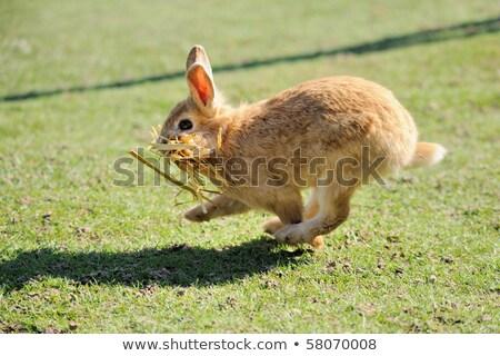 Flucht Kaninchen Holz Scheune Natur Schnee Stock foto © tepic