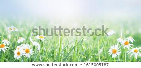 vermelho · erva · daninha · flor · blue · sky · jardim · verão - foto stock © filmstroem