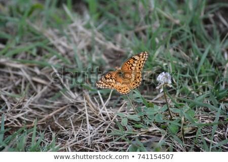 бабочка макроса выстрел Purple цветы Сток-фото © macropixel