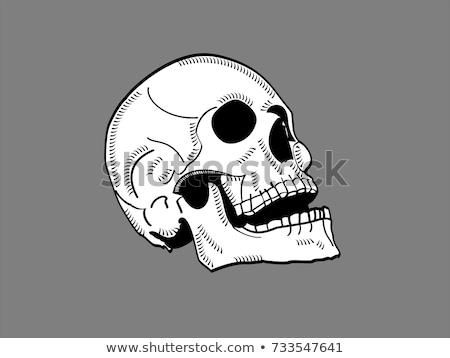 umani · cranio · quattro · dettagliato · correggere · tre - foto d'archivio © Pixelchaos